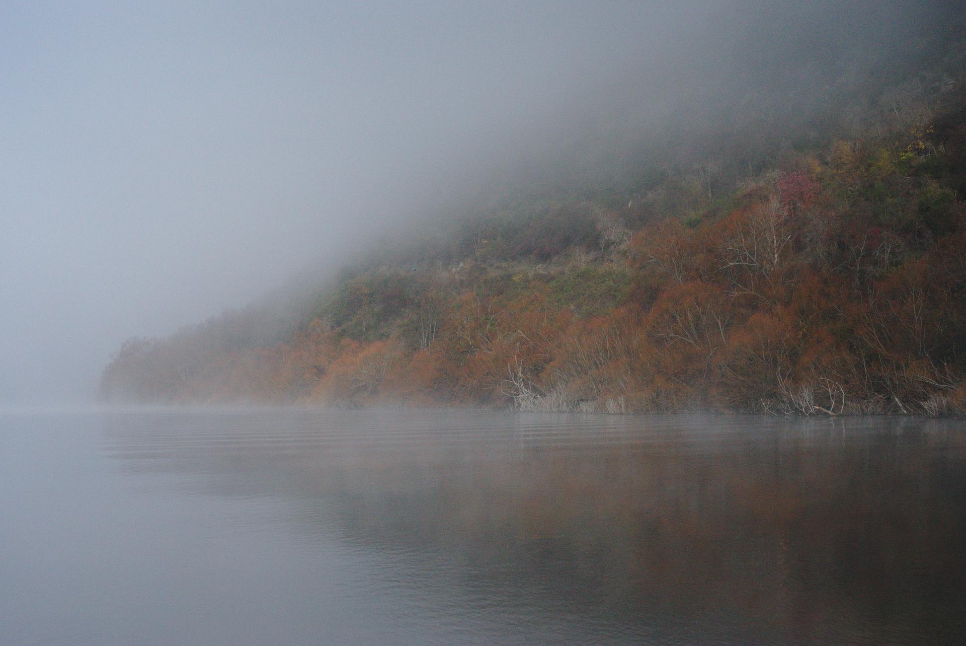 Foggy Lake Hayes
