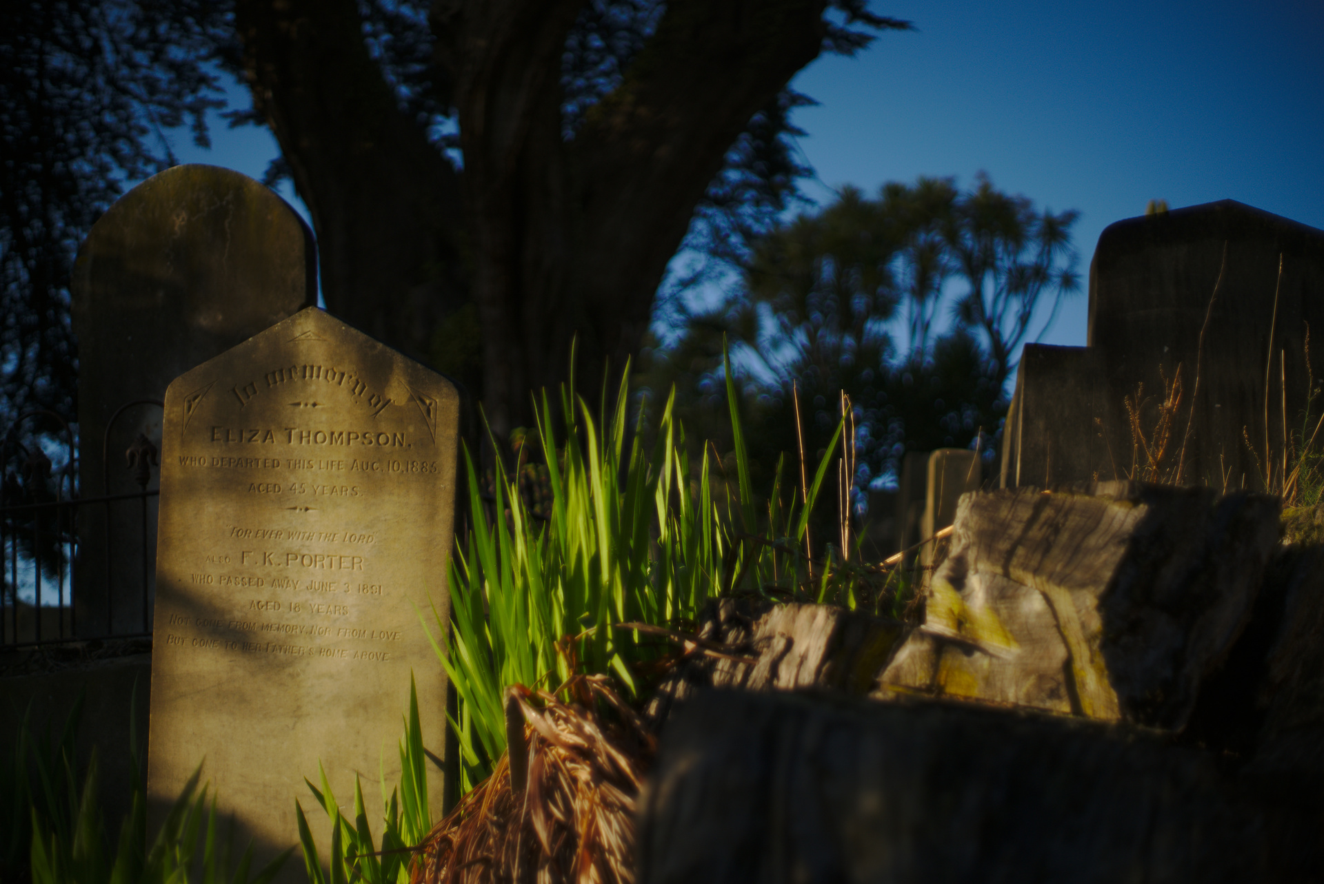 Bolton St Cemetery, Wellington. f/1.4