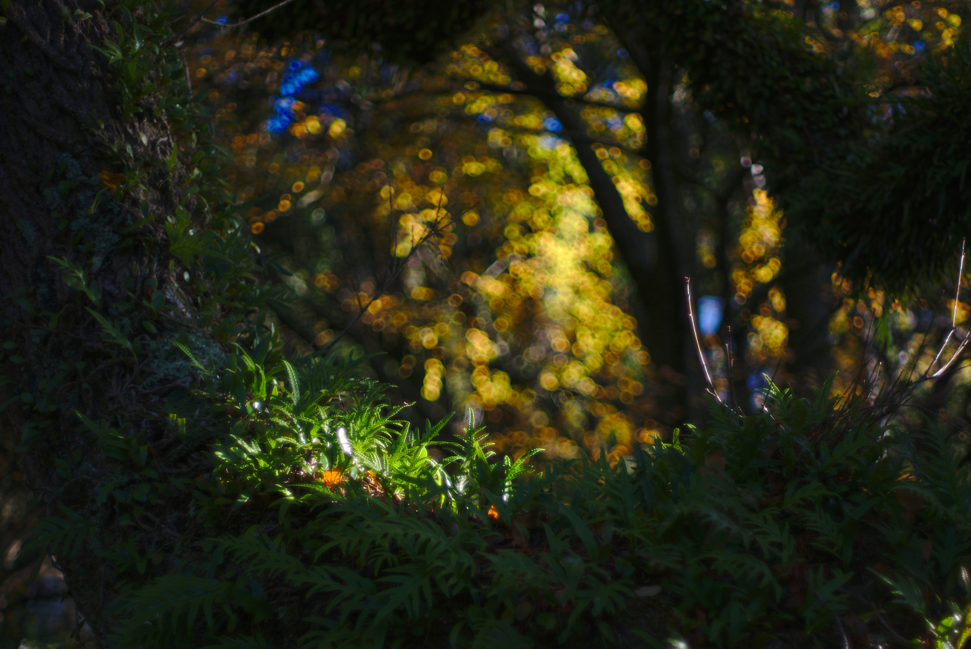 Autumn morning in the Wellington Botanical Gardens. Shot at f/2.8